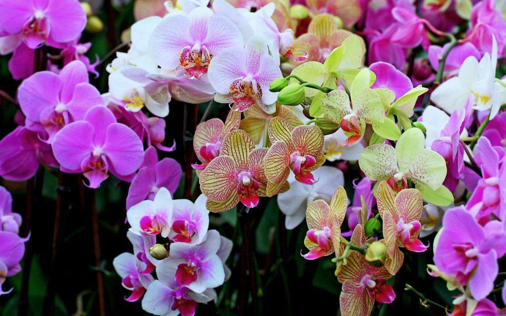 орхидеи в домашнем интерьере