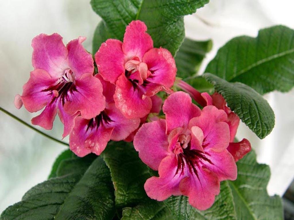 подкормка, пышная листва и цветение