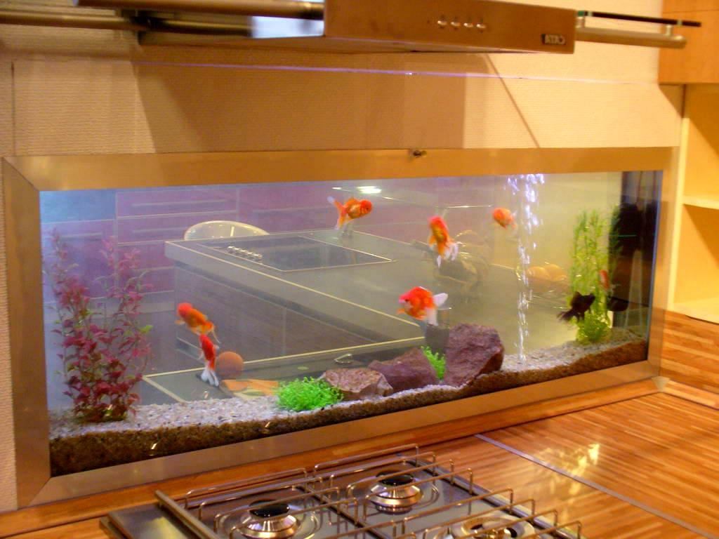 Чем сделать аквариум своими руками фото 745
