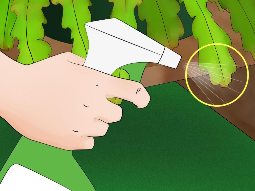 уход за поврежденными  кактусами