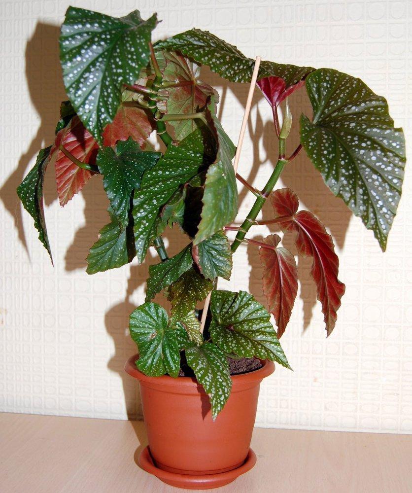 лиственная порода