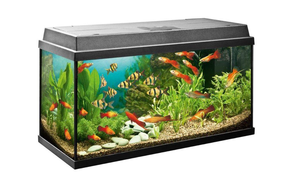 аквариум в зависимости от воды