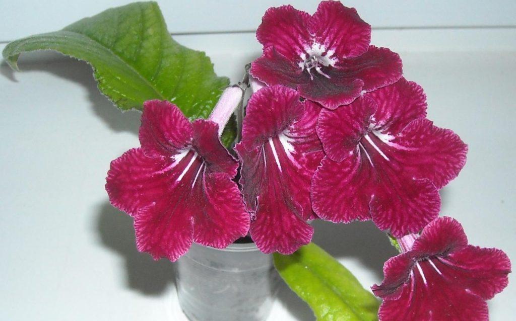 тара для цветов