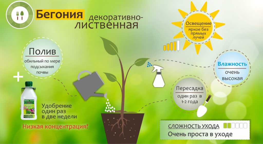 уход за растением: схема