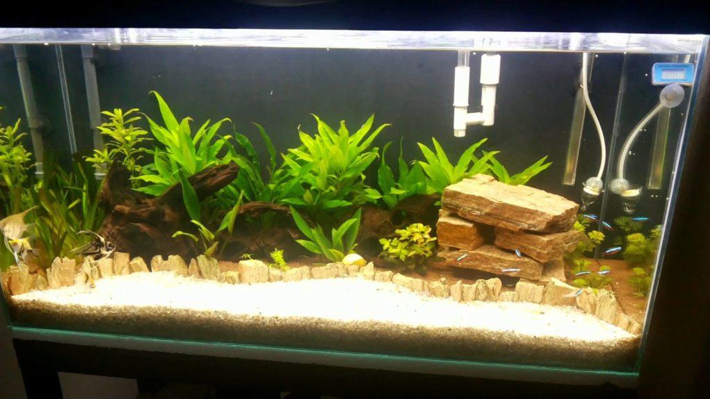 аквариум и водоросли