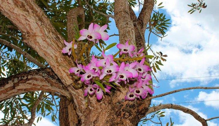Орхидеи на кроне дерева